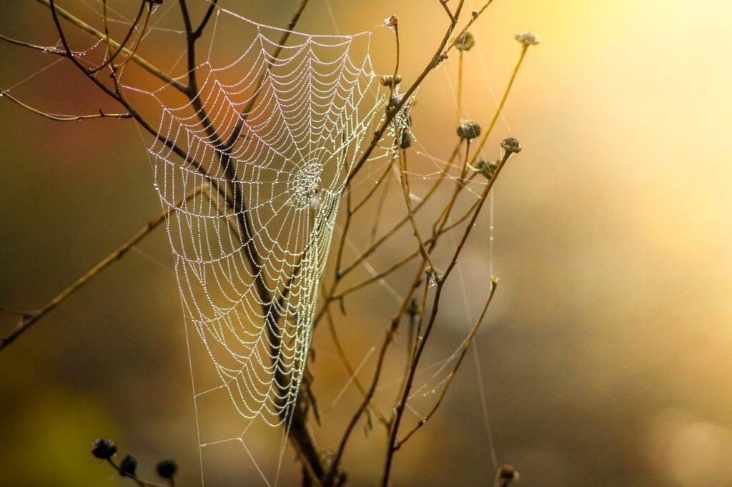 cobweb, dew, branches-1025021.jpg